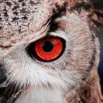 19 אתרי תמונות חינמיים הטובים ביותר ברשת